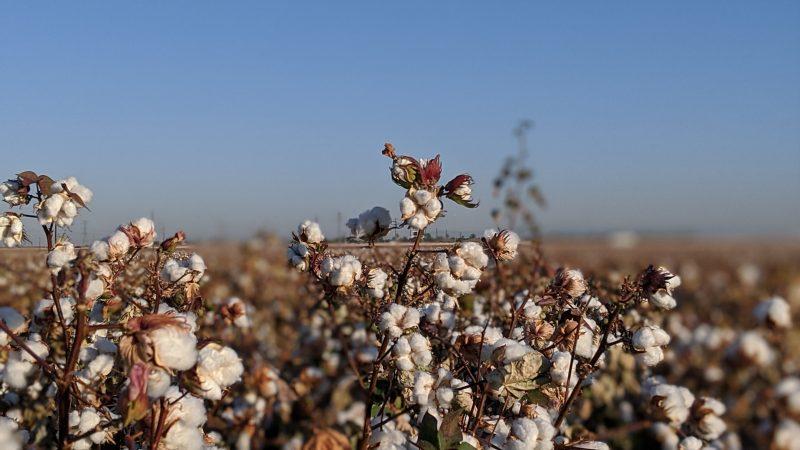 """Cooperação Sul-Sul Brasileira: O Caso do """"Cotton 4 + Togo"""""""