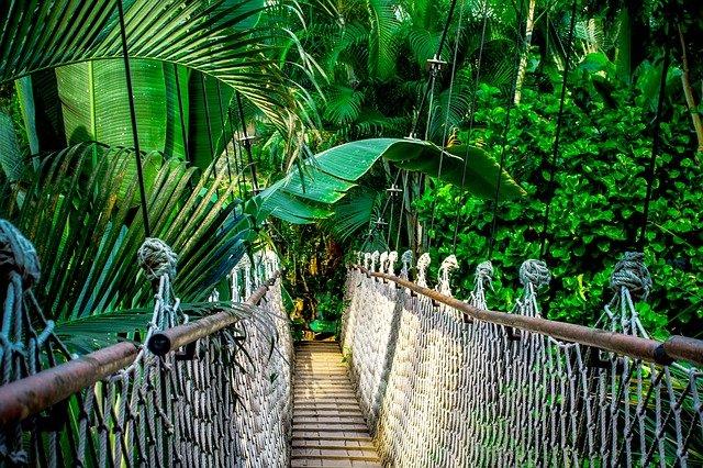 Amazônia contra a Biopirataria